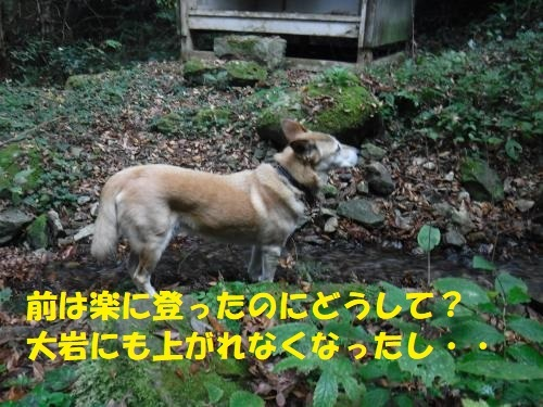 DSCF3064_convert_20191121143038.jpg