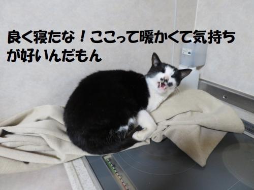 IMG_0860_convert_20191231142637.jpg