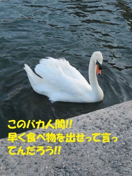 IMG_1134_convert_20200216165202.jpg