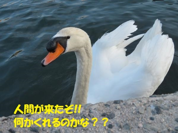 IMG_1137_convert_20200216165300.jpg