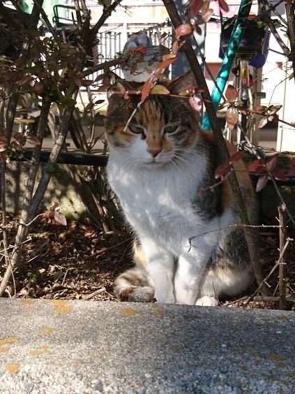 DSC_1934猫
