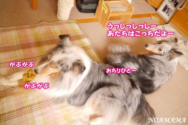 s_P1420115 (1)