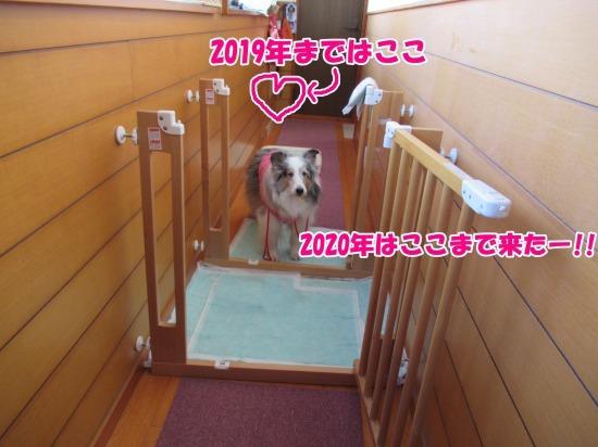 IMG_0415 (1)