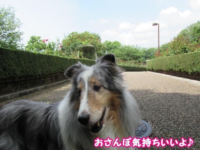 s_IMG_4931.jpg