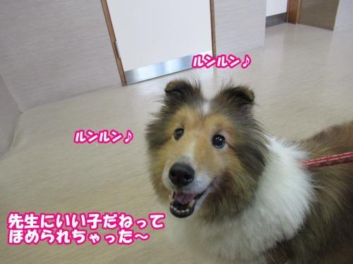 s_IMG_6063.jpg