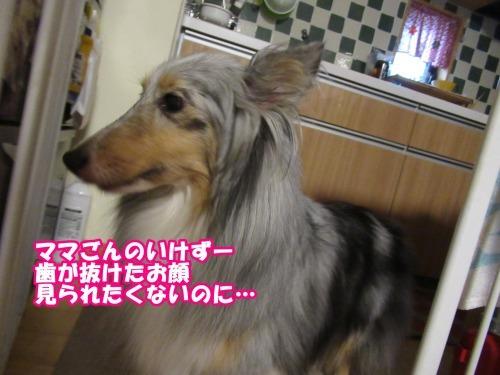 s_IMG_6147.jpg