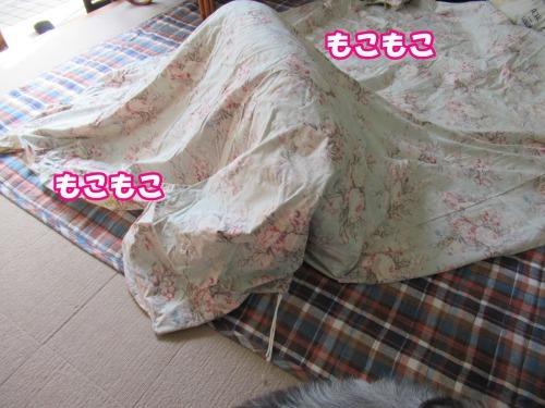 s_IMG_6499.jpg