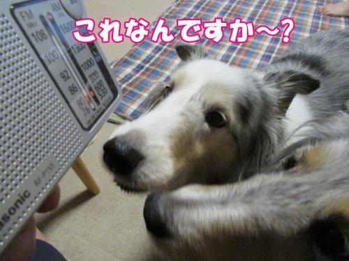 s_IMG_6839.jpg