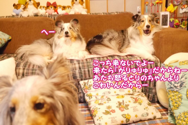s_P1410699.jpg