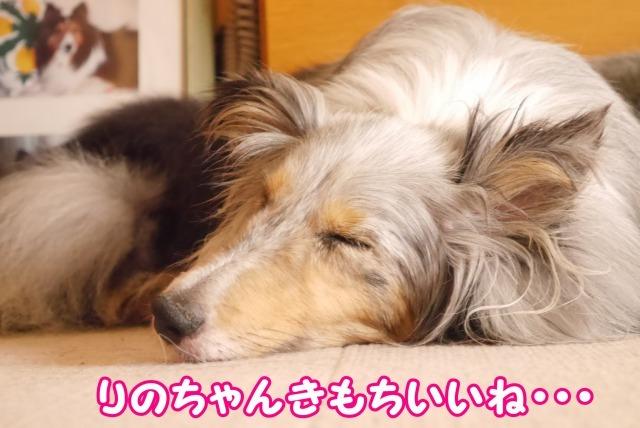 s_P1410735.jpg