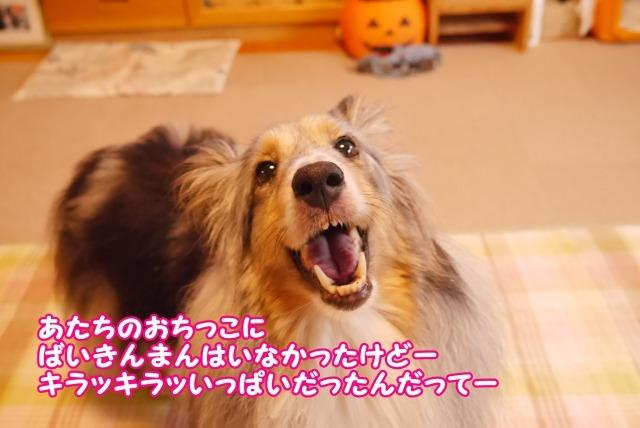 s_P1420147.jpg