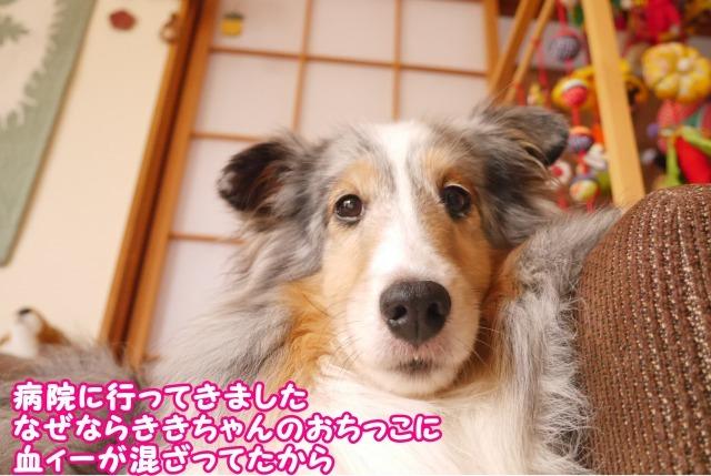 s_P1420374.jpg