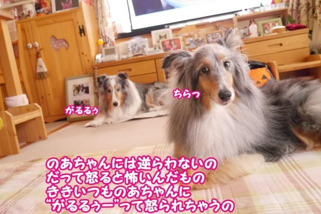 s_P1420493.jpg