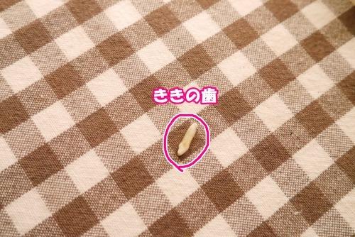s_P1450320.jpg