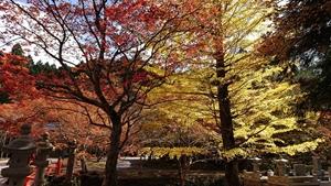 奥の院参道の紅葉