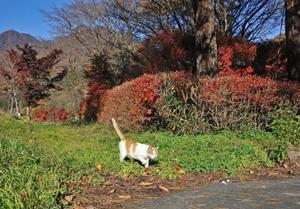 秋深し隣は何をする猫ぞ