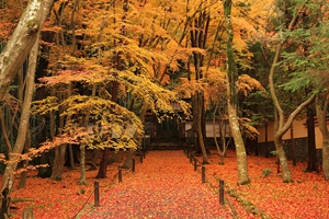 晩秋の京都