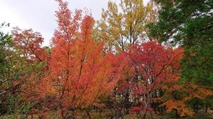 晩秋の庭園①