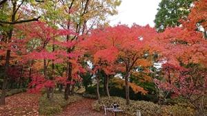 晩秋の庭園②