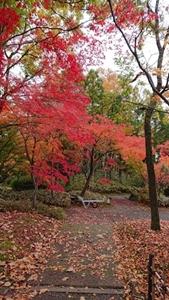 晩秋の庭園③