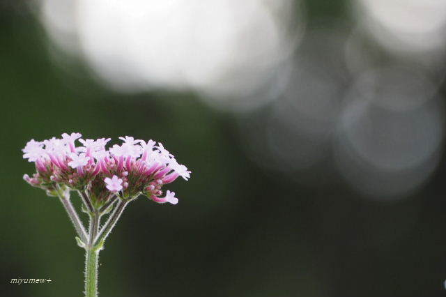 pink花190616