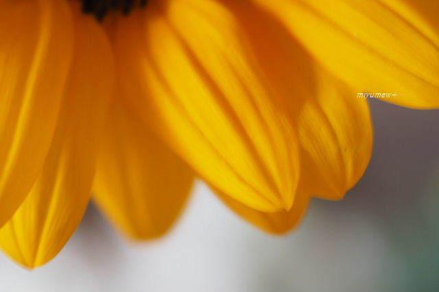 花びら190627