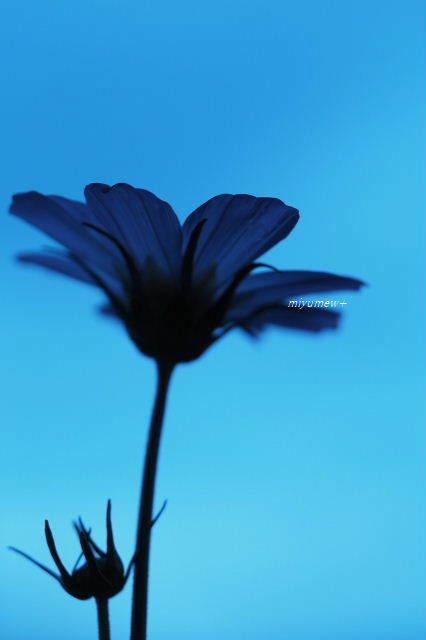 blue190930