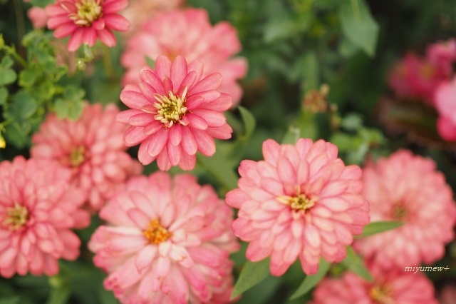 緑地の花191006