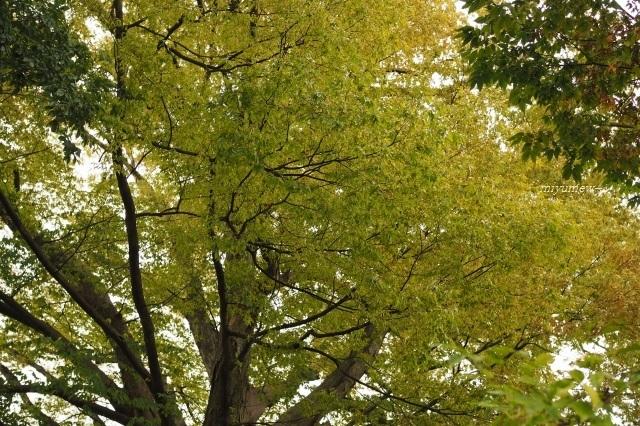 樹みどり191018