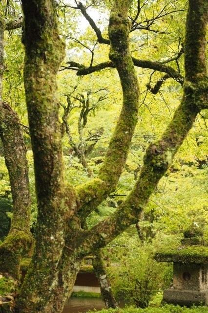 木々1910