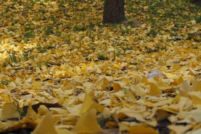 黄いろ絨毯191201