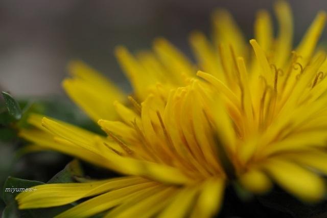 yellow200125