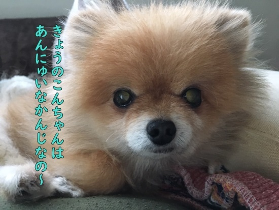 image119112401.jpeg