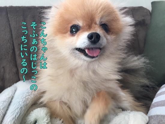 image219112701.jpeg