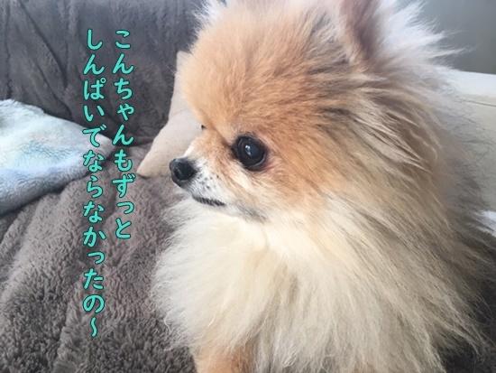 image320020401.jpeg