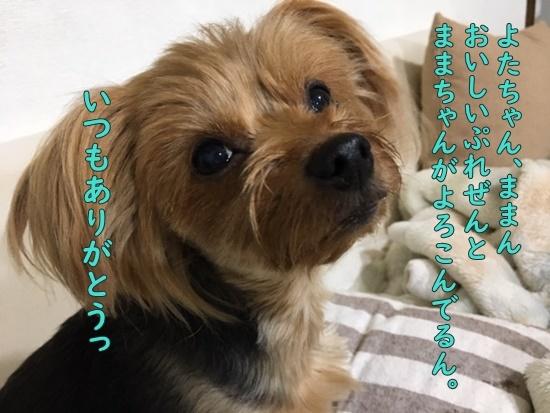 image419102501.jpeg