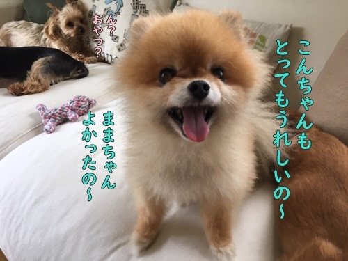 image519071901.jpeg