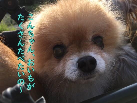 image619092601.jpeg