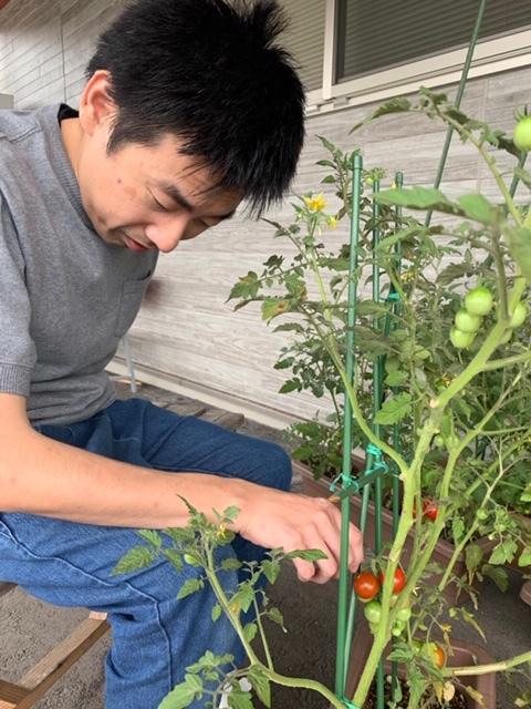 栄樹 トマト