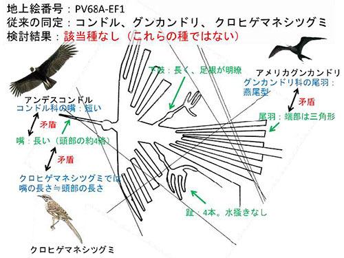 ナスカの地上絵の鳥を鳥類学の観点からはじめて同定