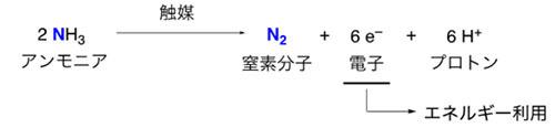 新触媒を用いたアンモニアの酸化反応の開発