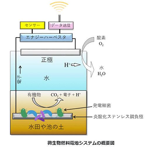 センサーを駆動できる微生物燃料電池システムの開発