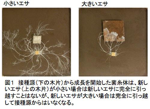 菌類が決断・記憶能力を持つことを発見