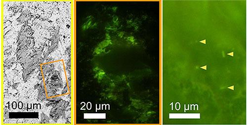 海底下深部の溶岩から微生物の検出に成功