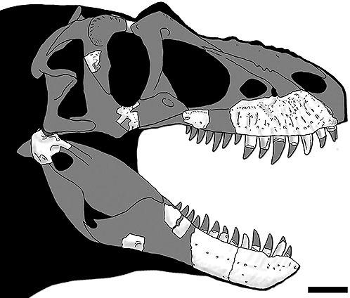 ティラノサウルス類の新種発見