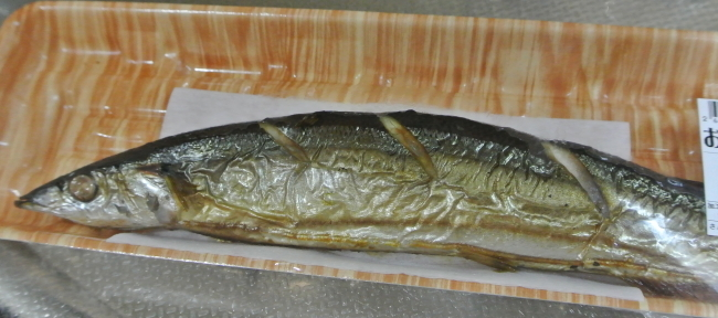 fish-3 (2)