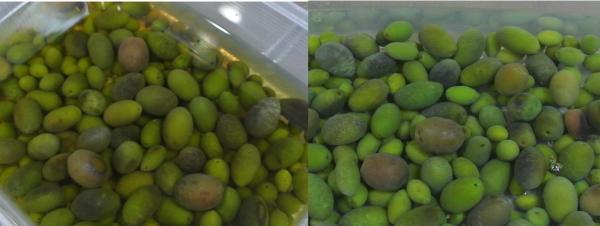 olive-6.jpg