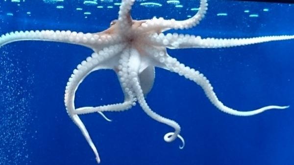 Octopus8578.jpg