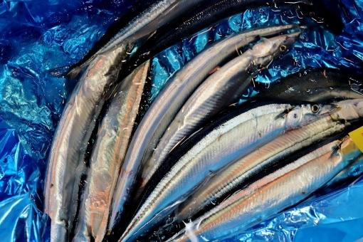 fish_sanma68.jpg