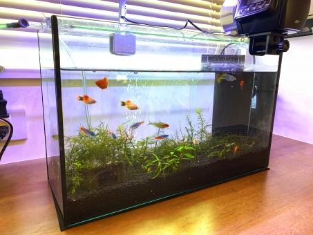 fish_water368736.jpg